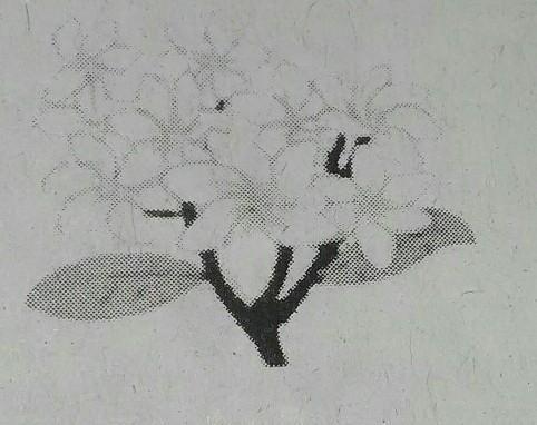 Jenis Binga Pada Gambar Di Samping Termasuk Jenis Bunga Sempurna Karenatolong Dijawab Brainly Co Id