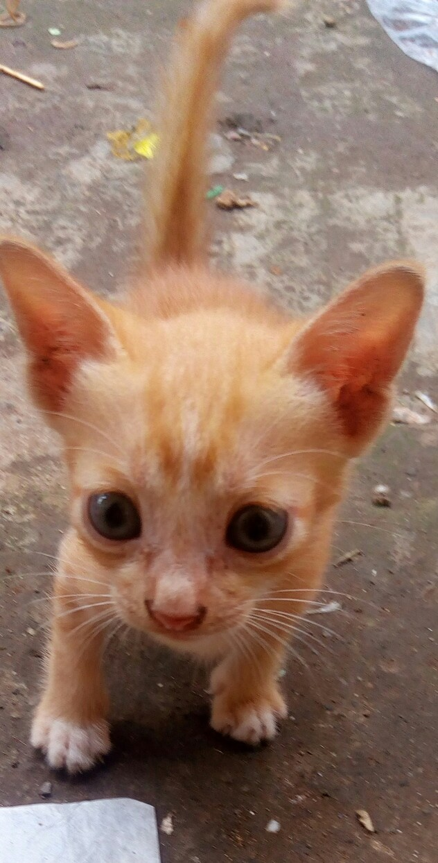 Bagaimana Cara Mengetahui Berapa Usia Kucing Brainly Co Id