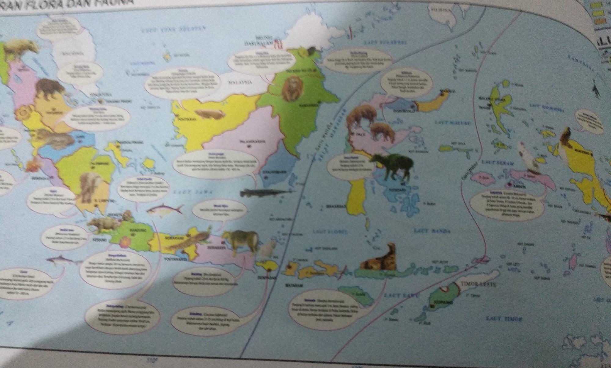 Gambrkan Peta Persebaran Fauna Di Indonesia Beserta Garis Pembatasny Brainly Co Id