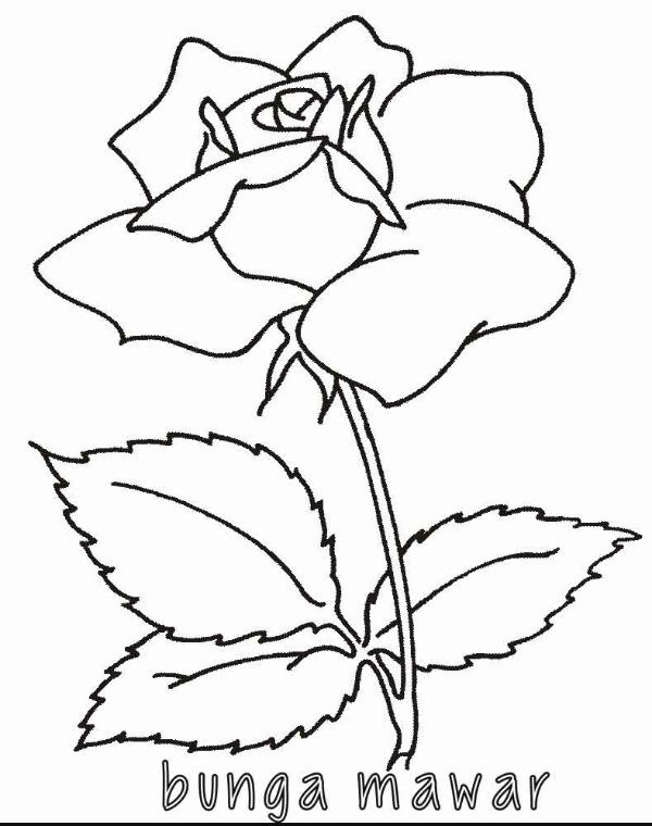 Tolong Carikan Gambar Flora Dan Fauna Soalnya Mau Saya Gambar Brainly Co Id