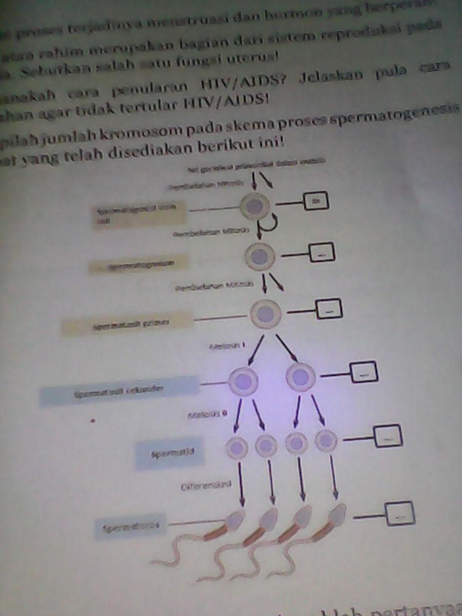 Lengkapilah jumlah kromosom pada skema proses spermatogenesis unduh jpg ccuart Choice Image