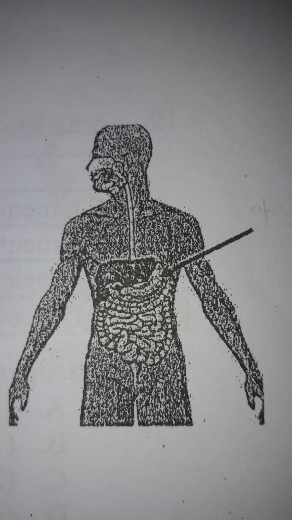 organ yang ditunjuk tanda panah menghasilkan enzim ...