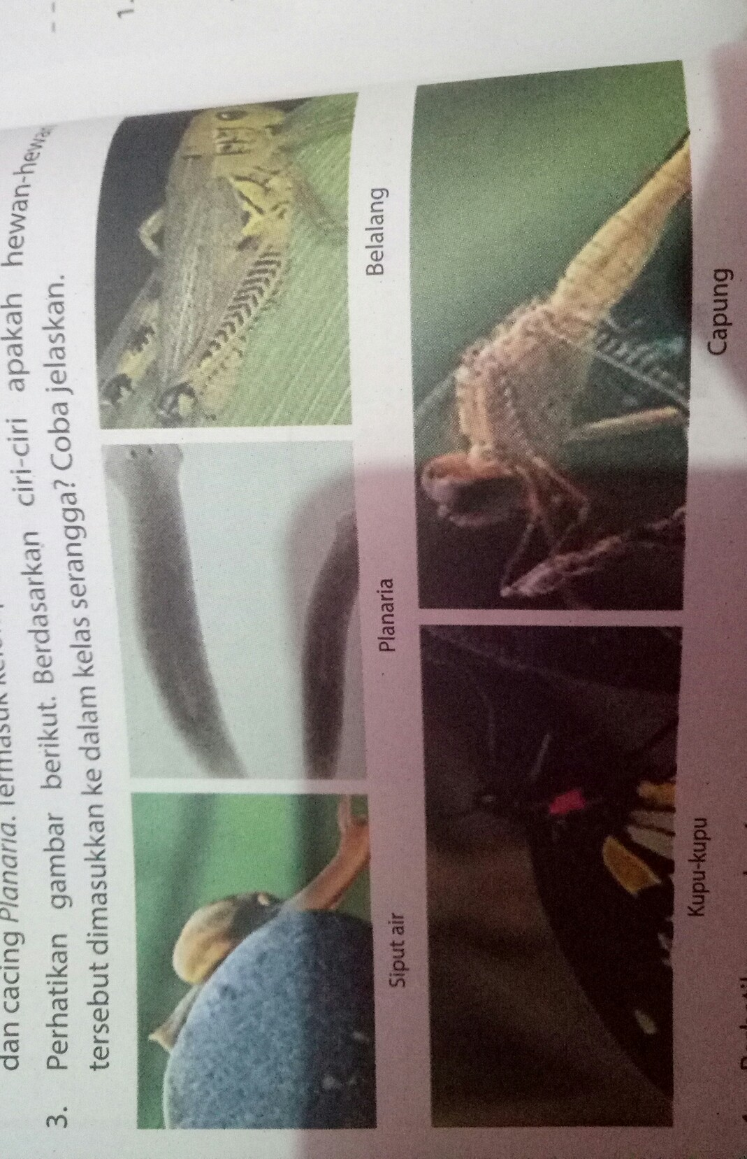 perhatikan gambar berikut berdasarkan ciri ciri apakah ...