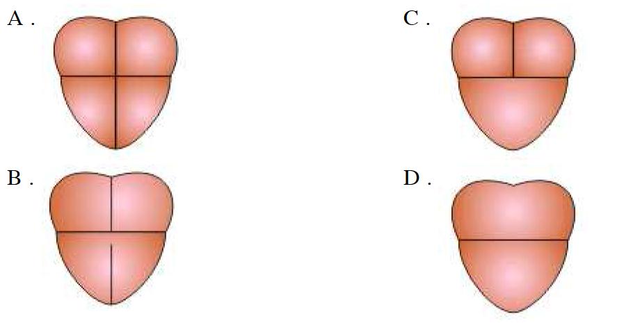 Gambar Jantung Yang Menunjukkan Golongan Ikan Adalah Tuliskan Penjelasannya Juga Brainly Co Id