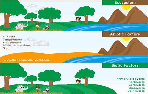 Sebut Dan Jelaskan Komponen Penyusun Ekosistem Berikan