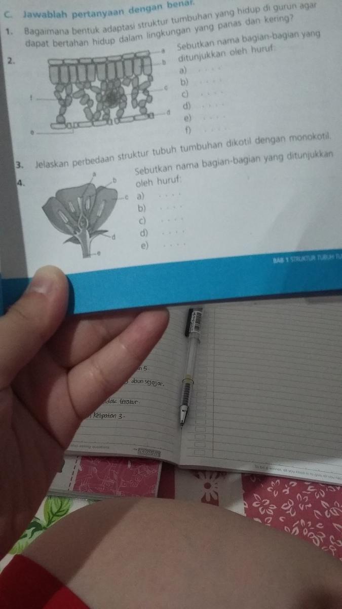 Alat Kelamin Jantan Dan Betina Pada Bunga Ditunjukkan Oleh ...