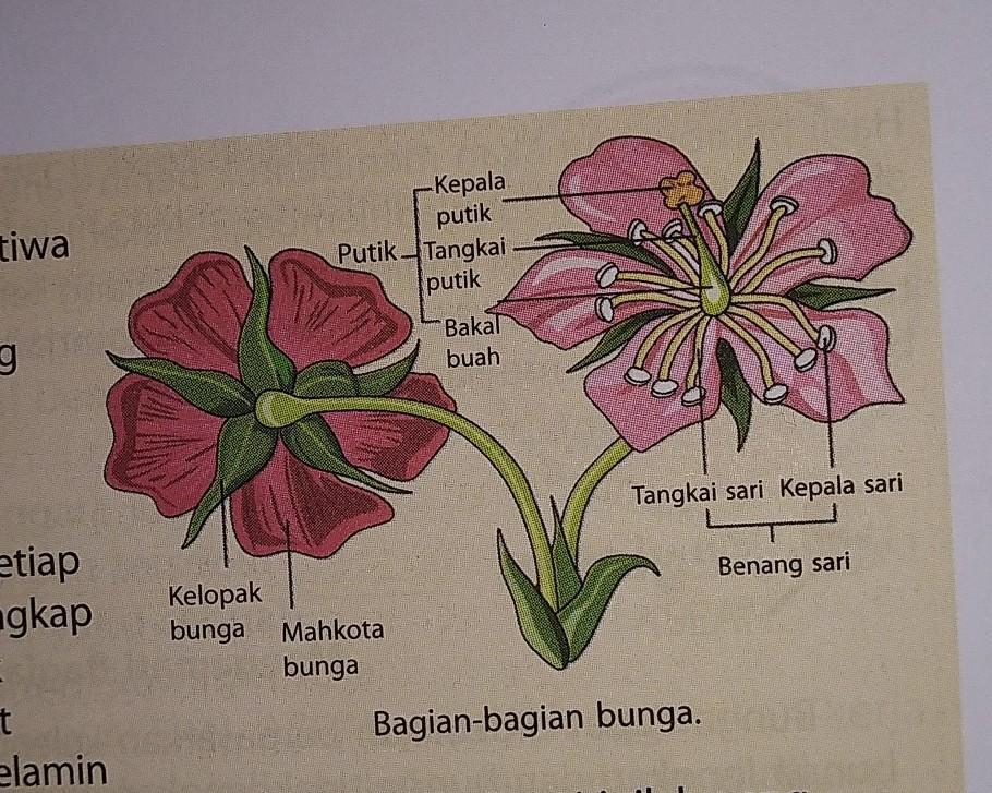 Gambarkan Bunga Beserta Bagian Bagiannya Brainly Co Id