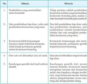 Perbedaan Mitosis Dengan Meiosis Pada Hewan Manusia Dalam Bentuk Tabel Brainly Co Id