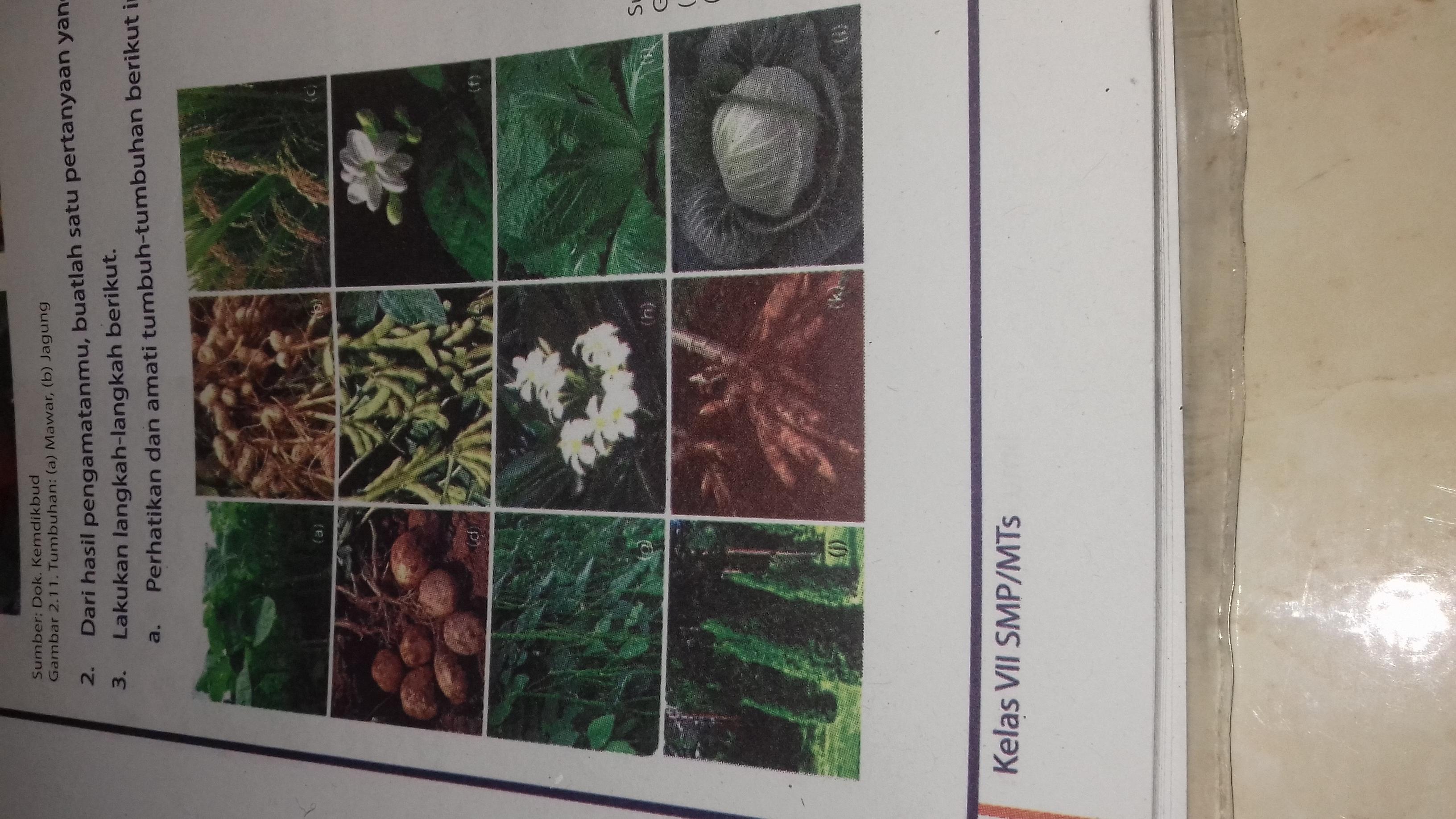 Kelompokan Tumbuhan Tumbuhan Tersebut Berdasarkan Persamaan Dan Perbedaan Ciri Yang Di Brainly Co Id