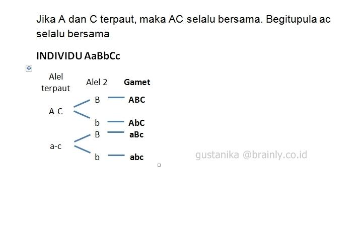 Individu aabbcc jika a dan c demikian pula a dan c mengalami tautan unduh jpg ccuart Choice Image