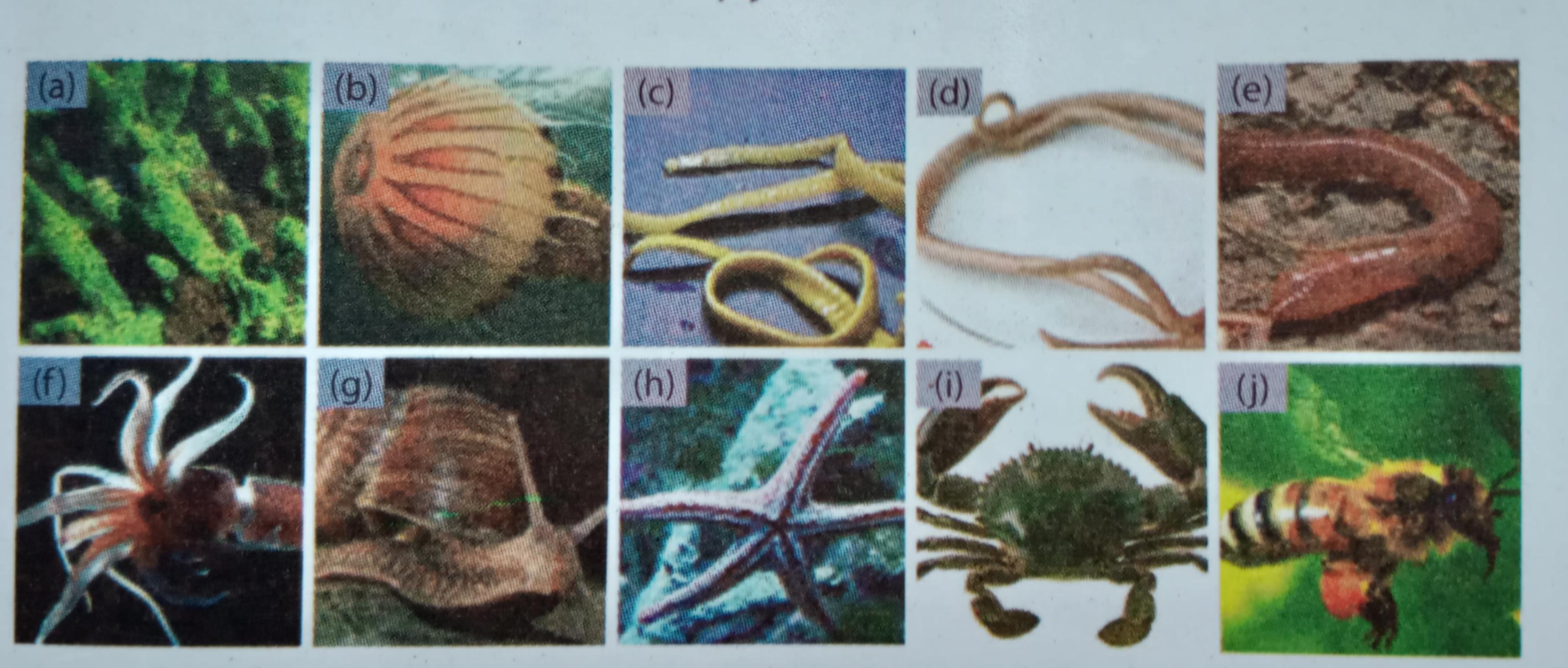 hewan yang termasuk nemathelminthes