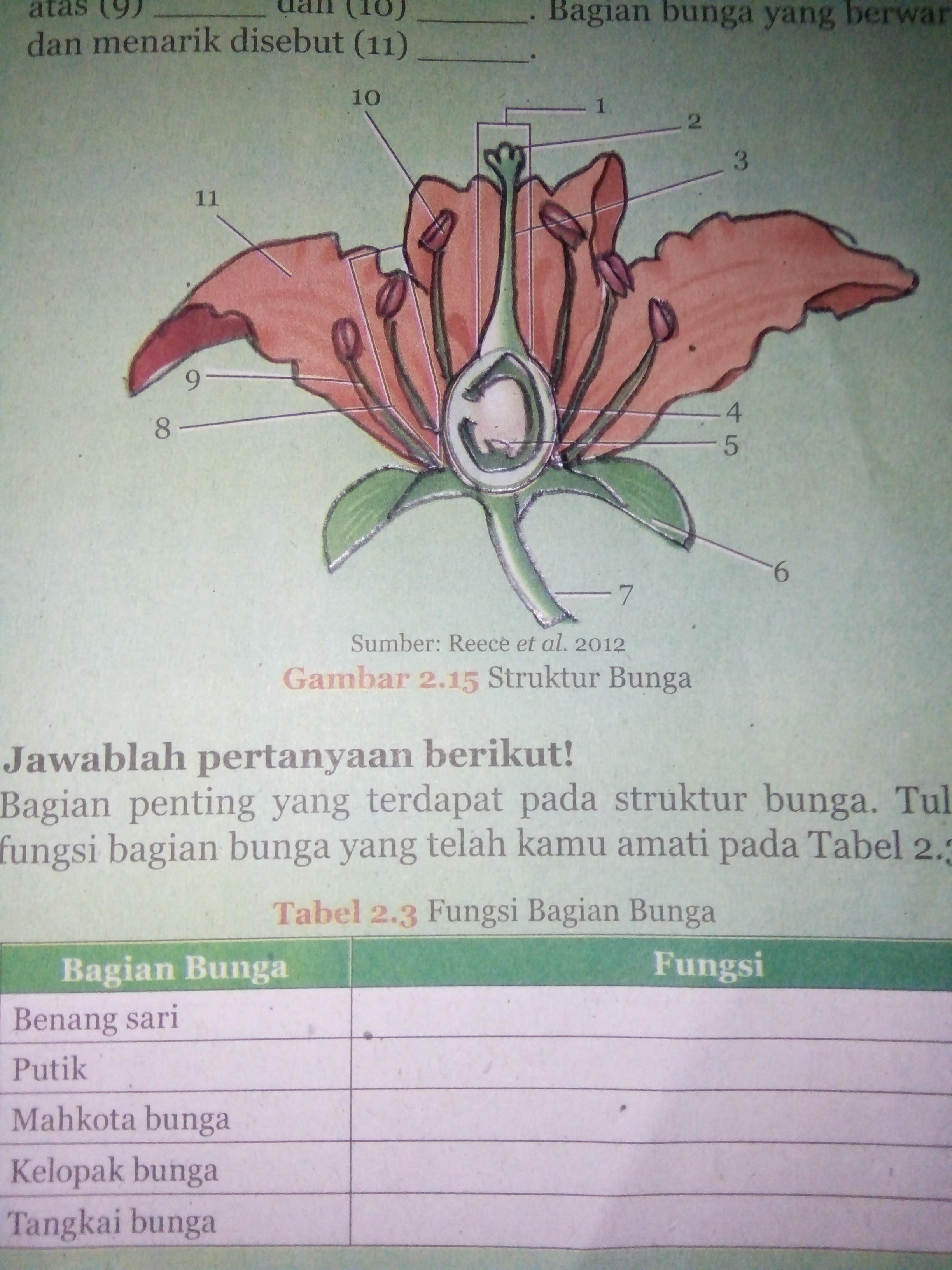 Tuliskan Bagian Bagian Bunga Please Dijawab Brainly Co Id