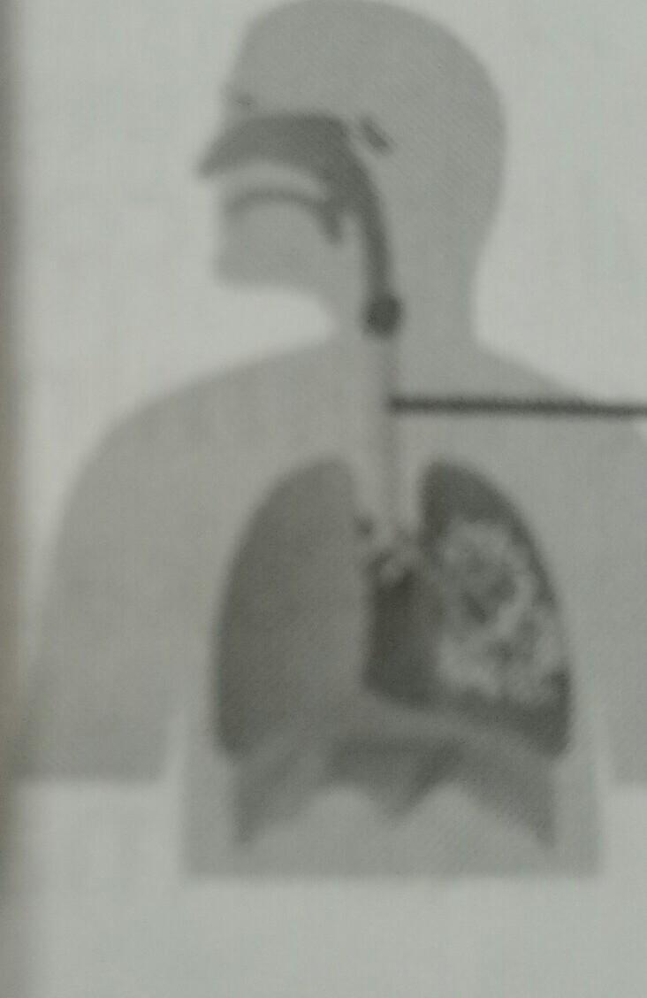 34++ Fungsi organ pernapasan yang ditunjukkan huruf x adalah information