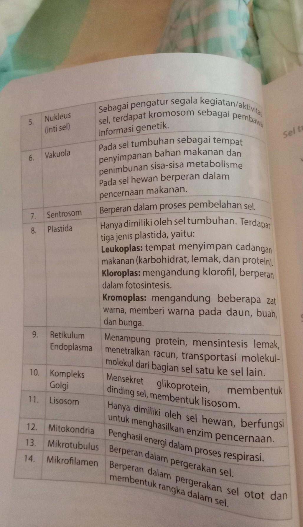 pengertian sel, bagian sel dan fungsinya,dan perbedaan sel ...