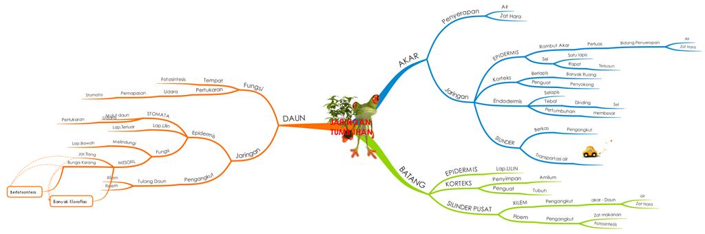 Gambar mind mapping ipa kelas 8 tentang struktur dan jaringan pada unduh png ccuart Images