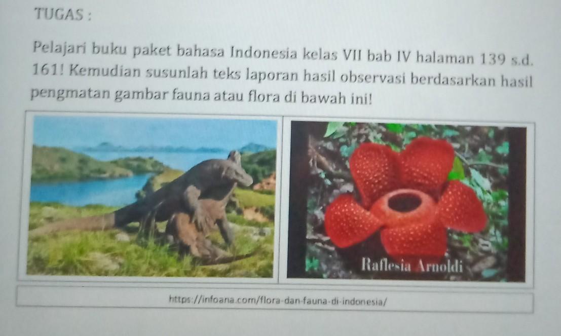 Susunlah Teks Laporan Hasil Observasi Berdasarkan Hasil Pengamatan Gambar Komodo Dan Bunga Brainly Co Id