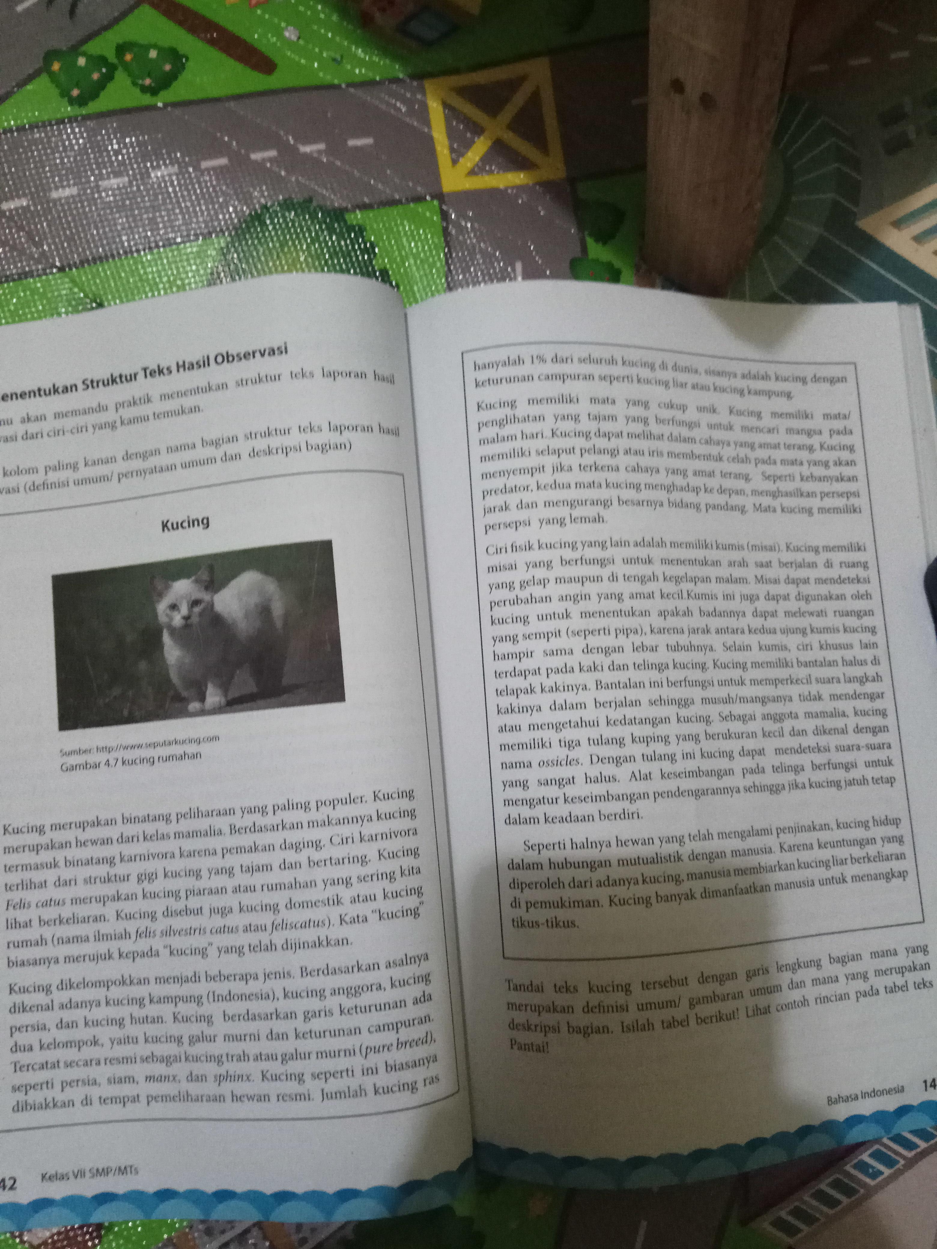 Tandai Teks Kucing Tersebut Dengan Garis Lengkung Bagian Mana Yang Merupakan Definisi Umum Gambaran Brainly Co Id