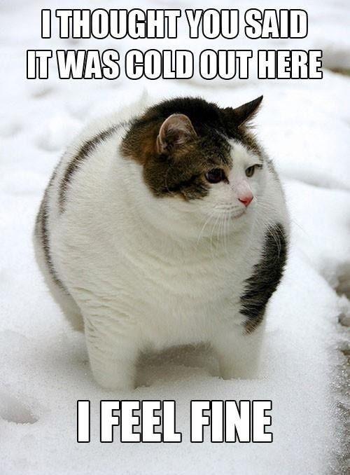 Tolong Buatkan Contoh Caption Tentang Kucing Brainly Co Id