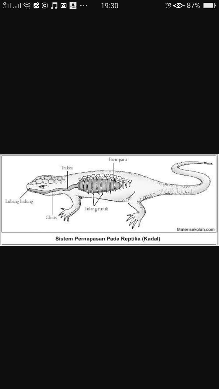 77 Koleksi Gambar Organ Pernapasan Hewan Reptil Gratis Terbaik