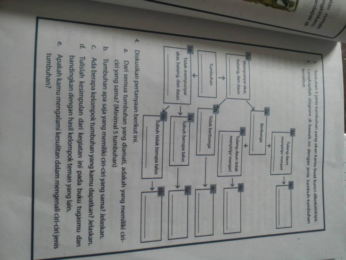 Lengkapilah diagram dibawah ini dengan jenis tumbuhan tumbuhan unduh jpg ccuart Images