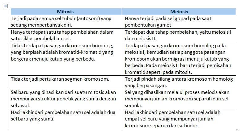 Perbedaan Mitosis Dan Meiosis Brainly Co Id