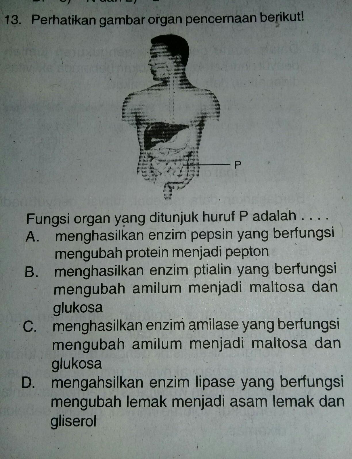 Fungsi organ yang ditunjuk huruf P adalah....A ...