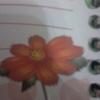 rosemary345