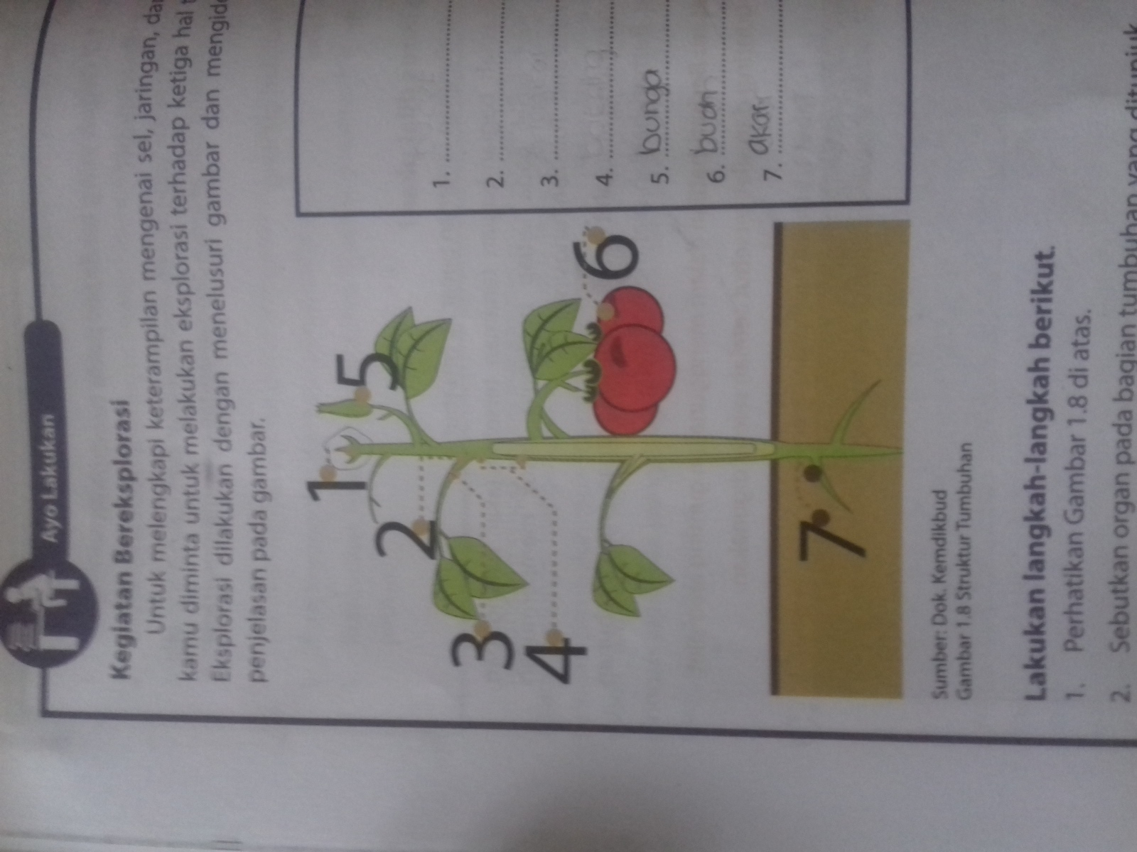 struktur tumbuhan tomat beserta fungsinya. - Brainly.co.id