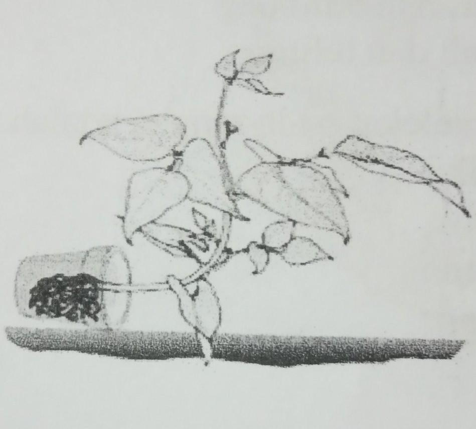 18 Perhatikan Gambar Gerak Pada Tumbuhan Pada Bagian Ujung Tanaman Seperti Gambar Di Atas Brainly Co Id
