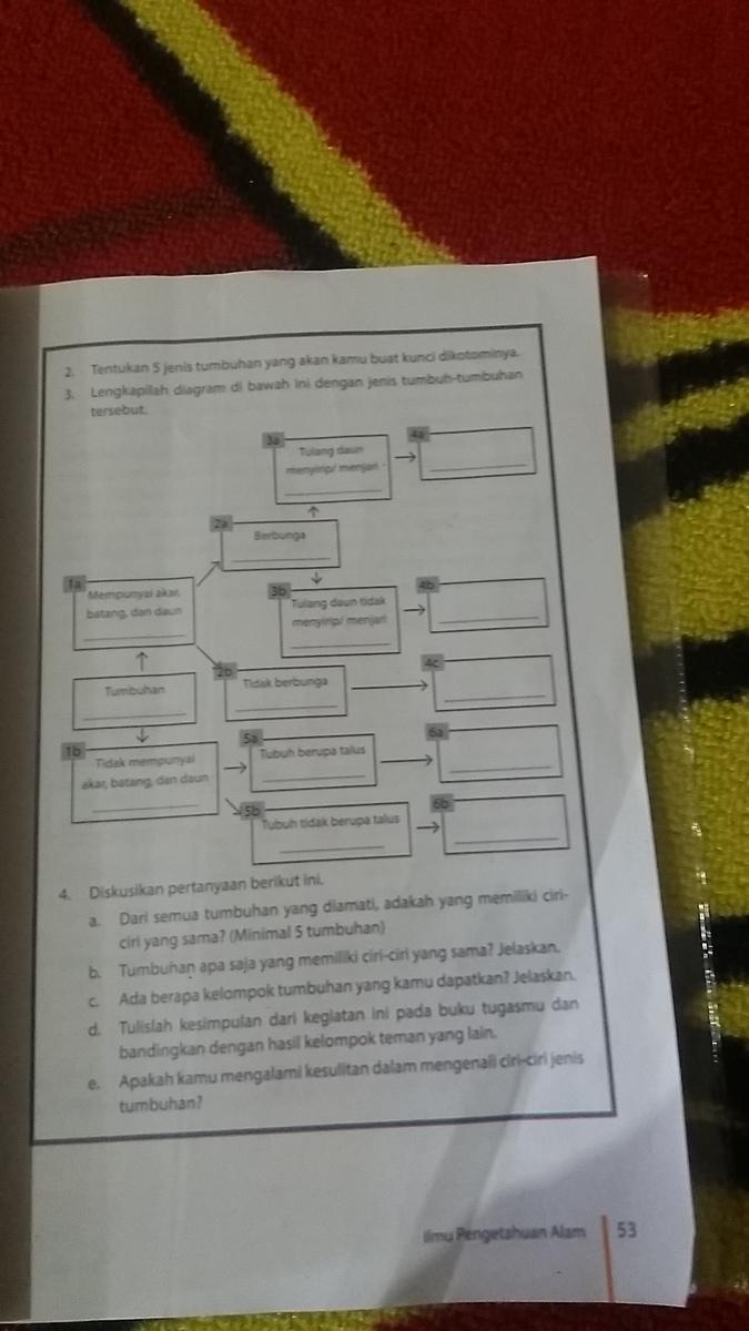 Tentukan 5 Jenis Tumbuhan Yang Akan Kamu Buat Kunci Dikotominya Beserta Diagramnya Brainly Co Id