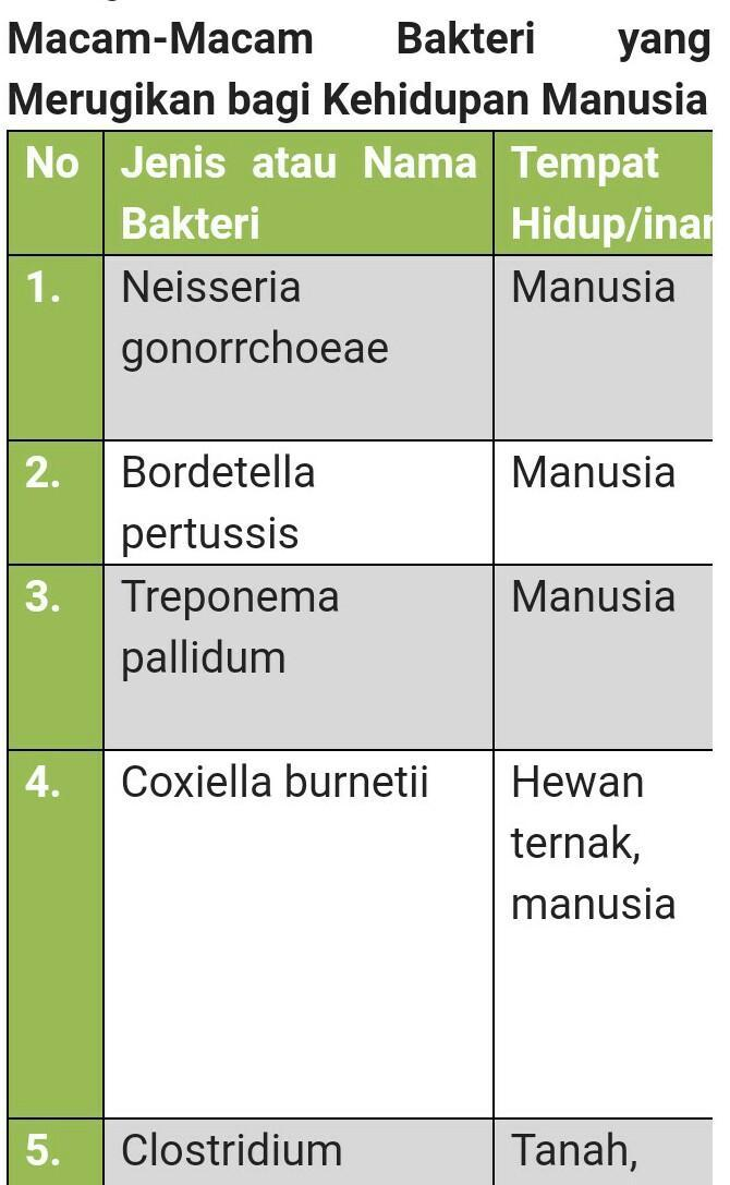 sebutkan dan jelaskan 3 contoh bakteri yg merugikan ...