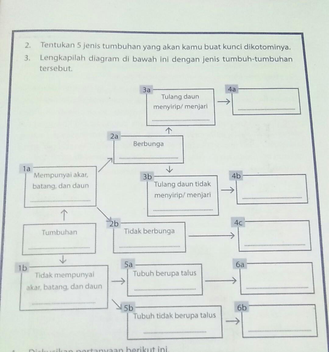 Lengkapilah Diagram Dibawah Inu Dengan Jenis Tumbuh Tumbuhan Tersebut Brainly Co Id