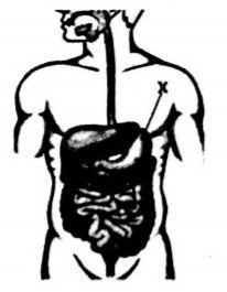 Zat yang dihasilkan oleh organ bertanda X beserta ...