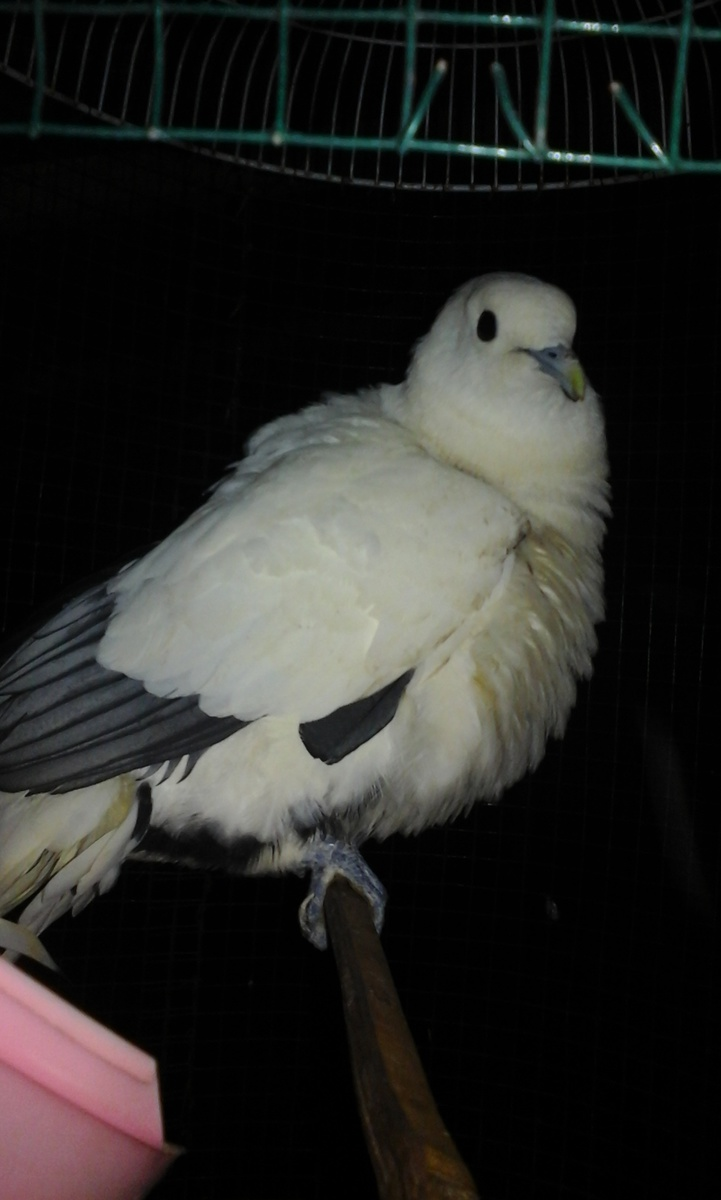 3000 Gambar Burung Dan Namanya HD Gratis
