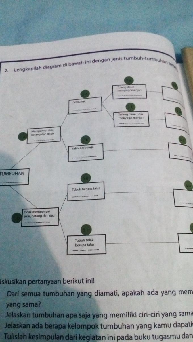 lengkapilah diagram dibawah ini dengan jenis tumbuh ...