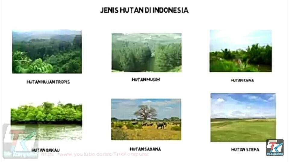 75bf712098e53fd52a8748888133ed6e - Jenis Jenis Hutan Di Indonesia